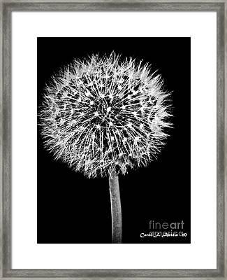 Dandelion Descending Framed Print by Carol F Austin