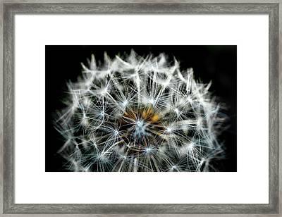 Dandelion Details Framed Print