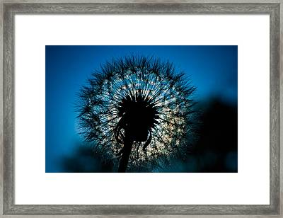 Dandelion Dream Framed Print