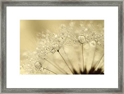 Dandelion Drops Framed Print by Sharon Johnstone