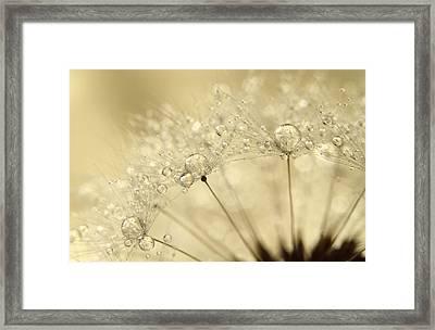 Dandelion Drops Framed Print