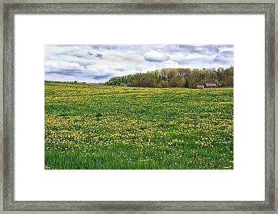 Dandelion Field With Barn Framed Print