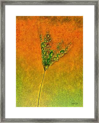 Dandelion Flower - Da Framed Print by Leonardo Digenio