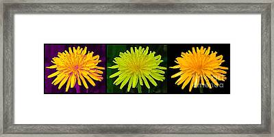 Dandelion Flowers Triptych Special Effects Framed Print