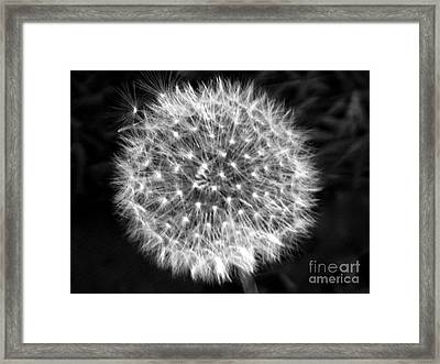 Dandelion Fuzz Framed Print