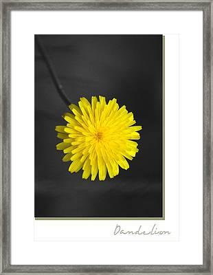 Dandelion Framed Print by Holly Kempe