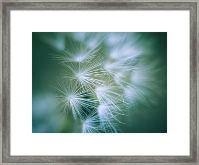 Dandelion II Framed Print