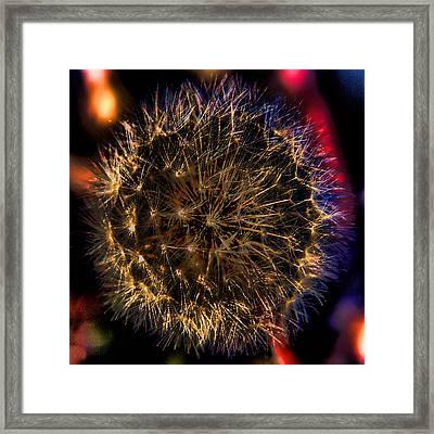 Dandelion II Framed Print by David Patterson