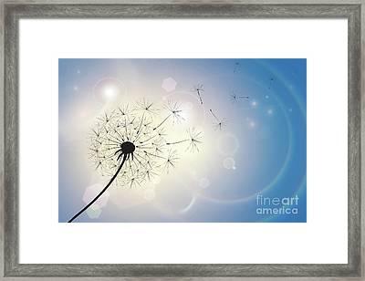 Dandelion In A Summer Breeze Framed Print by Jane Rix