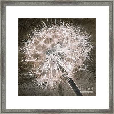 Dandelion In Brown Framed Print by Aimelle