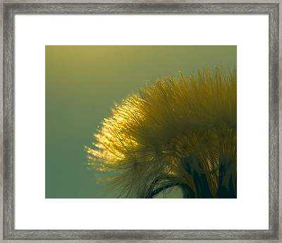 Dandelion In Green Framed Print