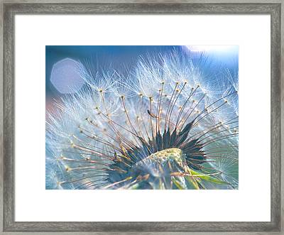 Dandelion In Light Framed Print