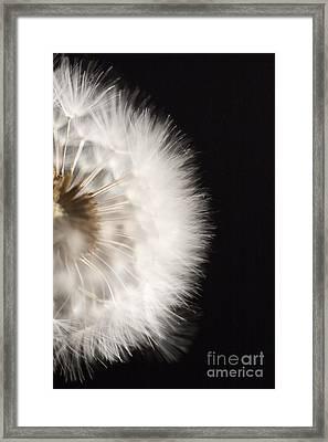 Dandelion In Macro 4 Framed Print