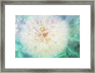 Dandelion In Winter Framed Print by Terry Davis