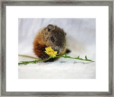 Dandelion Love Framed Print