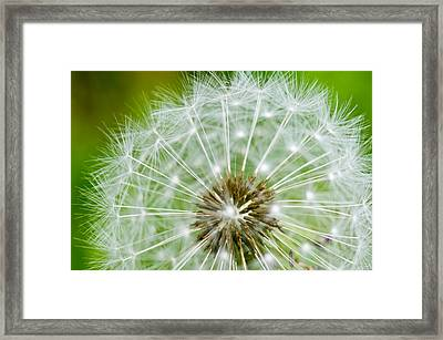 Dandelion Macro Framed Print by Edward Myers