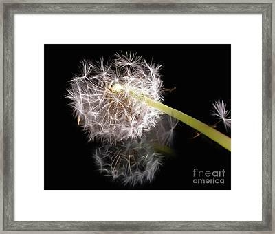 Dandelion On Glass Framed Print