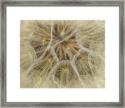 Dandelion Particles Framed Print