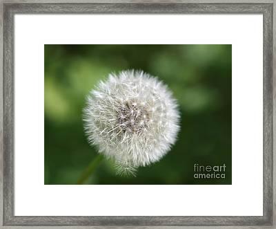 Dandelion - Poof Framed Print by Susan Dimitrakopoulos