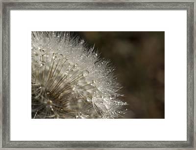 Dandelion Rain Framed Print