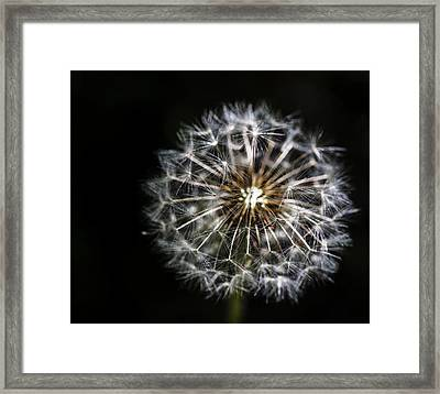 Framed Print featuring the photograph Dandelion Seed by Darcy Michaelchuk