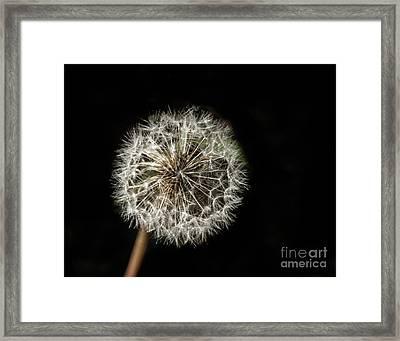 Dandelion Seeds Framed Print by Robert Bales