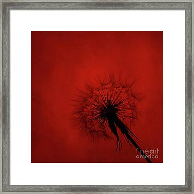 Dandelion Silhouette On Red Textured Background Framed Print