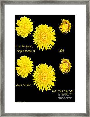 Dandelion Simplicity Framed Print by Gena Weiser