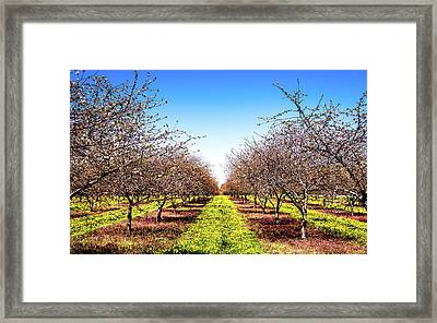 Framed Print featuring the photograph Dandelion Stripes by Onyonet  Photo Studios