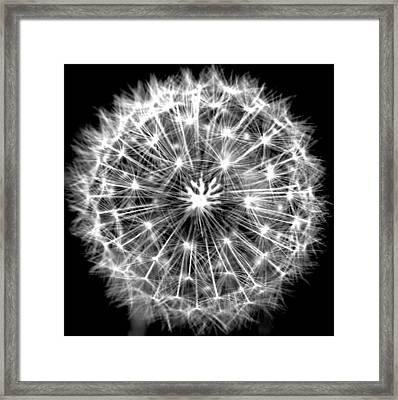 Dandelion Framed Print by Susie DeZarn