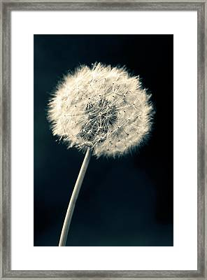 Framed Print featuring the photograph Dandelion by Ulrich Schade