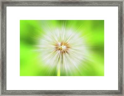 Dandelion Warp Framed Print