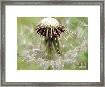 Dandelion Wish 8 Framed Print