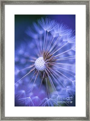 Dandelion Wish Framed Print