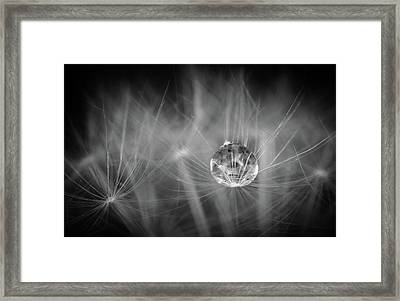 Dandelions Are Good For Something Framed Print by Tracy Munson
