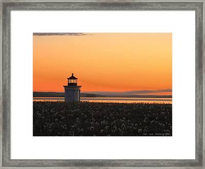 Dandelions At Sunrise Framed Print