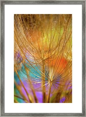 Dandelions In Spring Framed Print