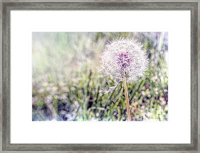 Dandilion Wishes Framed Print