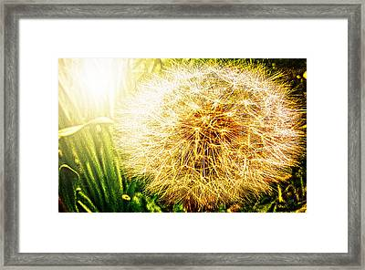 Dandy Framed Print