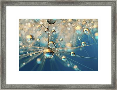 Framed Print featuring the photograph Dandy Drops In Royal Blue by Sharon Johnstone