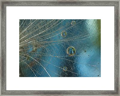 Dandy Drops Framed Print by Jean Noren