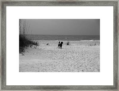Dandy On The Beach Framed Print