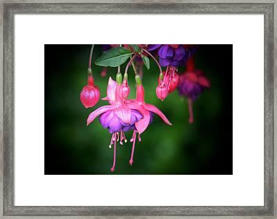 Danglers Framed Print