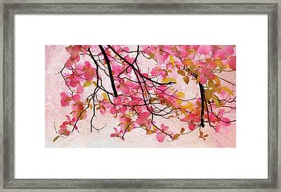 Dangling Dogwood Framed Print by Jessica Jenney