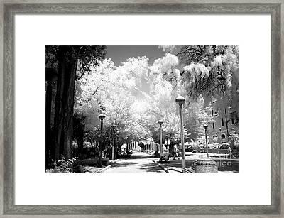 Daniel Garden Framed Print