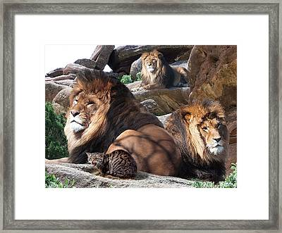 Daniel In The Lion Framed Print by Bill Stephens