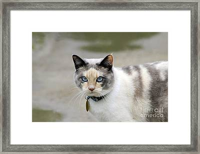 Danni Girl Framed Print by Teresa Zieba