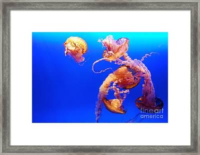 Danza Peligrosa Framed Print by Cesar Marino