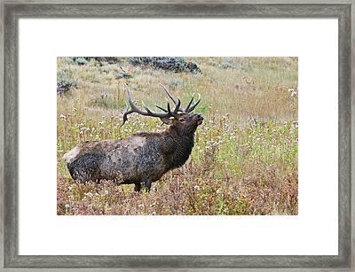 Framed Print featuring the photograph Dapper Dan by Gary Lengyel