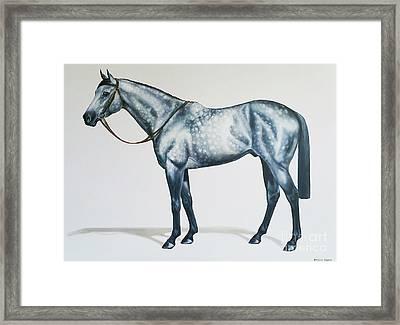 Dapple Gray Framed Print